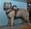 Railway Collecting Dog \