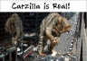 Catzilla is real!